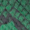 pitón verde